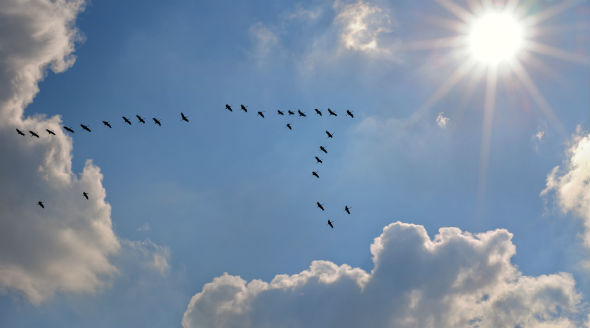 Primavera gli uccelli migratori che dall 39 africa tornano - Primavera uccelli primavera colorazione pagine ...